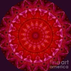 Pink Lace Mandala by Susan Rydberg