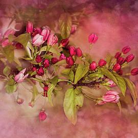 Pink Nostalgia by Wes Iversen