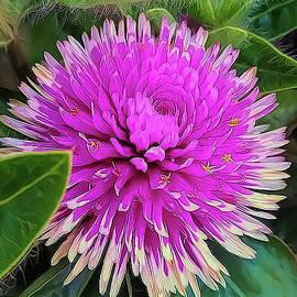 Pink Perfection by Carolyn Krek