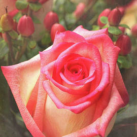 Pink Rose Blush by Sharon McConnell
