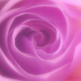 Pink Rose Macro 4 by Johanna Hurmerinta