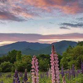 Pink Sky by Darylann Leonard Photography