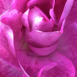 Pink Swirl by Art By ONYX