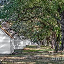 Plantation Cabins - Mcleod Plantation by Dale Powell