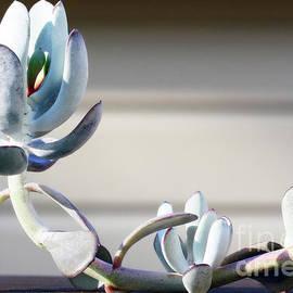 Plants are Aliens  by Steven Digman