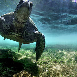 Pointing Turtle by Sean Davey