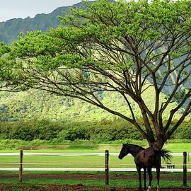 Polo Pony Waimanalo by Kevin Smith