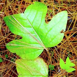 Broken Heart In Poplar And Pine by Alida M Haslett