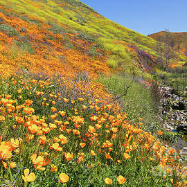 Poppies and Stream by Jeff Parish