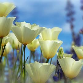 Poppies In White  by Saija Lehtonen