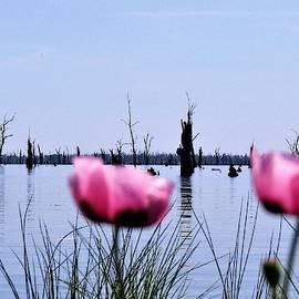 Poppies on Lake Mulwala  by Joan Stratton