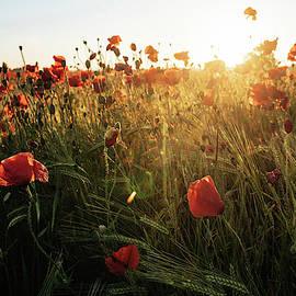 Poppy Field Sunrise 6 by James Billings
