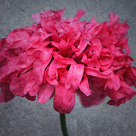 Poppy Galore by Richard Andrews