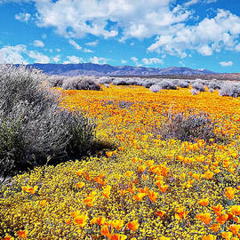 Poppy Patch - California by Glenn McCarthy Art and Photography