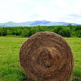 Portrait Of A Bale Of Hay by Alida M Haslett