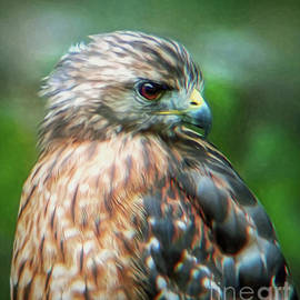 Portrait of a Hawk by Sue Melvin