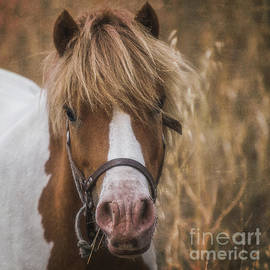 Portrait Of A Little Pony by Flo Photography