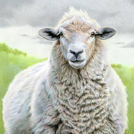 Portrait Of A Sheep by Sarah Batalka
