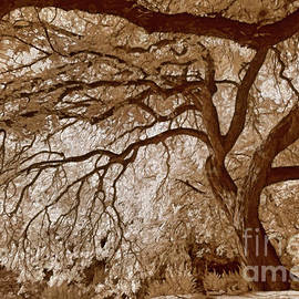 Portrait of a Tree in Infrared by Norman Gabitzsch