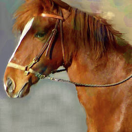Portrait of The Paso Fino Mare - Fierce And Gentle by Patricia Keller