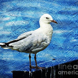 Posing Seagull by Trudee Hunter