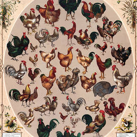 Poultry Of The World Poster by Graphicaartis