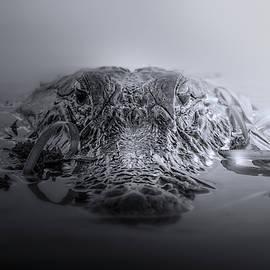 Predator by Mark Andrew Thomas