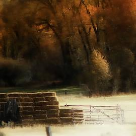 Prepared for Winter by Lenore Senior
