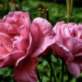 Pretty And Pink by James DeFazio