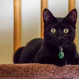 Pretty Black Kitten by Jack Peterson