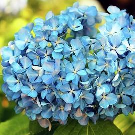 Pretty In Blue by Cynthia Guinn