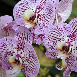 Pretty Purple Petals  by Lynda Lehmann