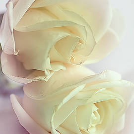 Pretty wilting white roses with pink tinge by Cordia Murphy