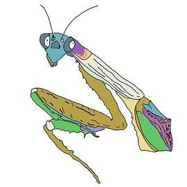 Preying Mantis  by Marshal James