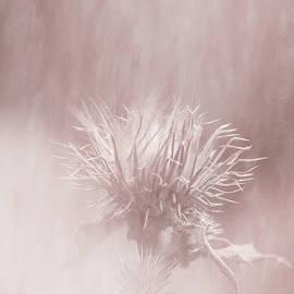 Prickly Beauty by Jaroslav Buna