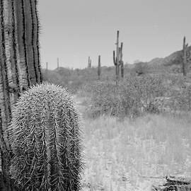 Prickly Heat by HW Kateley