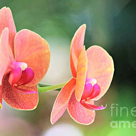 Profile Of Coral Orchids by Diann Fisher