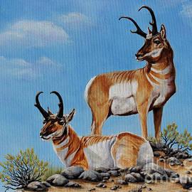Pronghorn Antelope by Pechez Sepehri