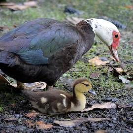 Richard Bryce and Family - Proud Mama Duck