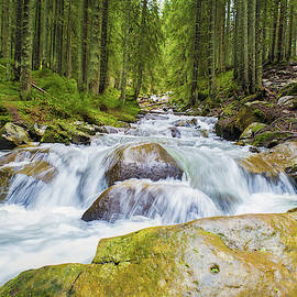 Prut river flowing through the coniferous forest on the hills of by Psycho Shadow