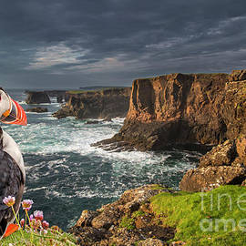 Puffin at Eshaness, Scotland by Arterra Picture Library