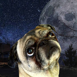 Pug and Moon by Erika Kaisersot