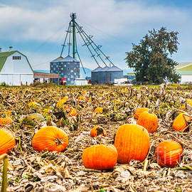 Pumpkin patch on the farm by Bruce Block