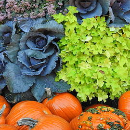 Pumpkins and Red Cabbage by Barbara Ebeling