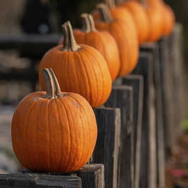 Pumpkins 10/11 by Bruce Frye