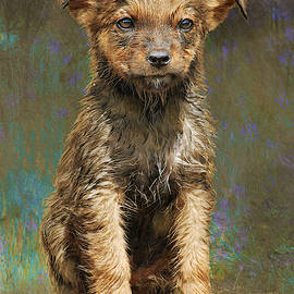 Puppy After The Swim by R christopher Vest