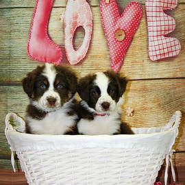 Puppy Love by Marilyn DeBlock