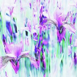 Purple and Blue by Slawek Aniol