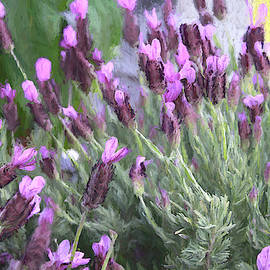 Purple and Pink by Donna Kennedy