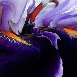 Purple Bearded Iris by Carel Schmidlkofer